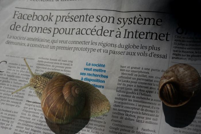 Les escargots et l'Internet