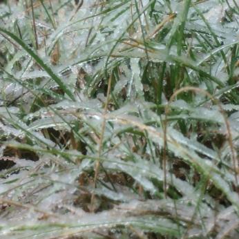 freeze4