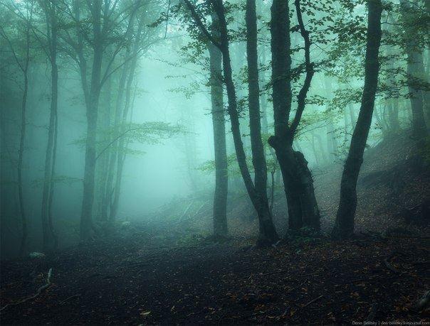 forest_12208684_1203420243007464_1047921311521117753_n.jpg