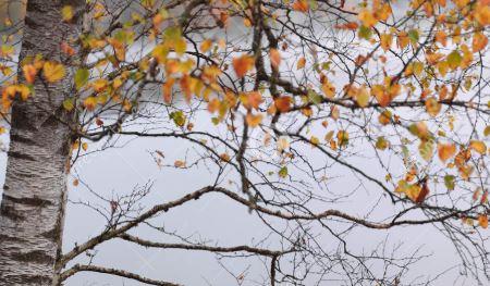 arbre automne 2